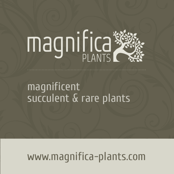 Magnifica Plants - Magnificent succulent, caudiciform and